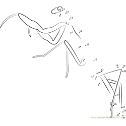 Long Praying Mantis Dot to Dot Worksheet
