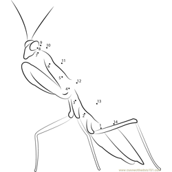 Mantis Religiosa Dot to Dot Worksheet