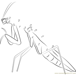 Mantis Dot to Dot Worksheet