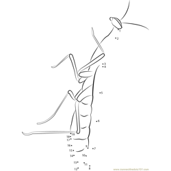 Sphodromantis Viridis Dot to Dot Worksheet