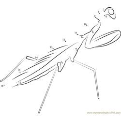 Spiny Praying Mantis Dot to Dot Worksheet