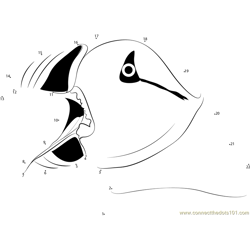 Puffin Open Mouth