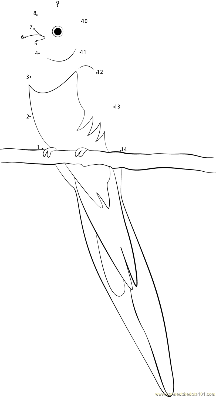 Pharomachrus Mocinno Dot To Dot Printable Worksheet Quetzal Coloring Page