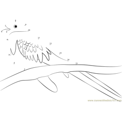 Golden Headed Quetzal Dot to Dot Worksheet