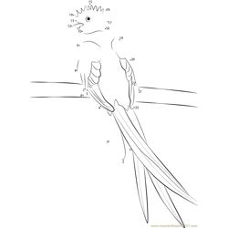 Resplendent Quetzal Dot to Dot Worksheet