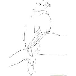 Wild Quetzal Dot to Dot Worksheet