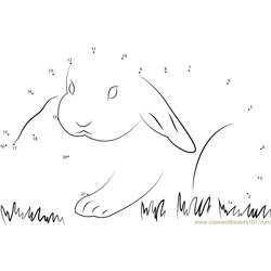 Lovely Rabbit Dot to Dot Worksheet