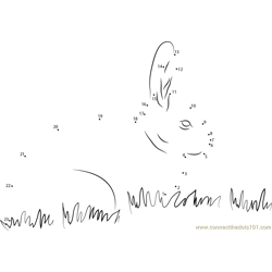 Rabbit in Grass Dot to Dot Worksheet