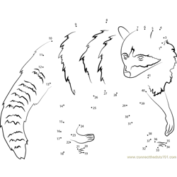 Raccoon Dot to Dot Worksheet