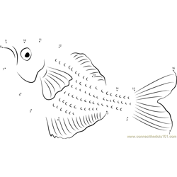 Rainbowfish Underwater