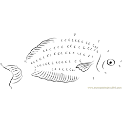 Red Rainbowfish with Yellow Colouration Dot to Dot Worksheet