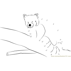 Red Panda By Neomys Dot to Dot Worksheet