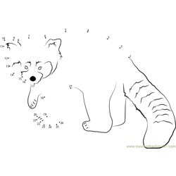 Red Panda Looking Toward Me Dot to Dot Worksheet