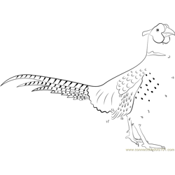 Ring-necked Pheasant Standing