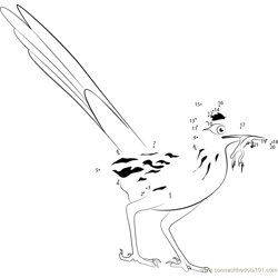 Eating Greater Roadrunner