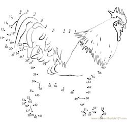 Rooster Dot to Dot Worksheet