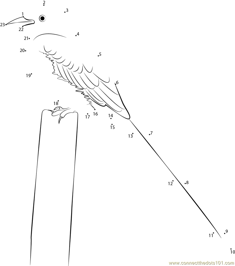 idaho state bird coloring page - scissor tailed flycatcher state bird of oklahoma dot to