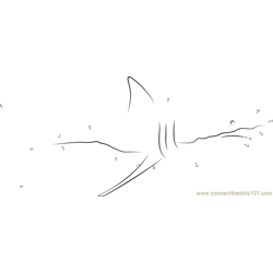 Shark Cropped