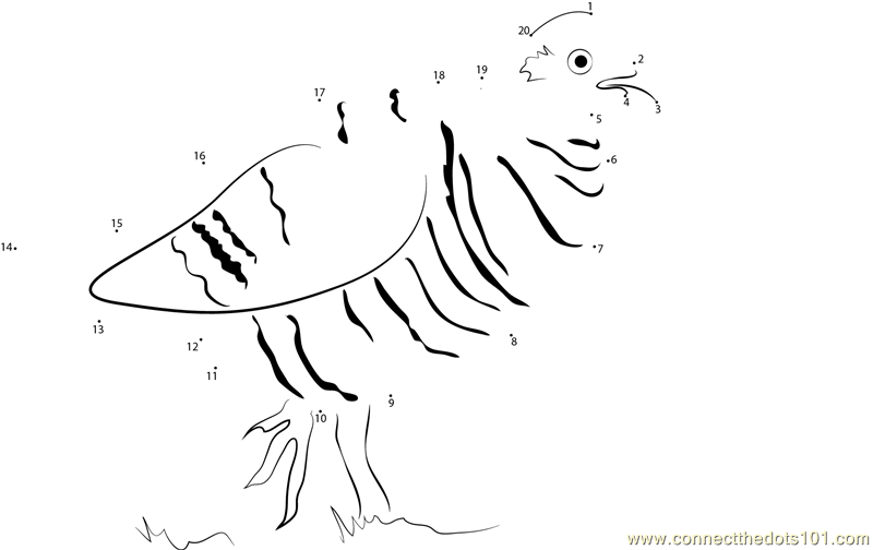 ruffed grouse coloring page - ruffed grouse dot to dot printable worksheet connect the