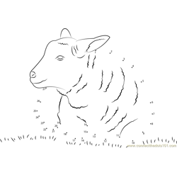 Lamb Sheep Dot to Dot Worksheet