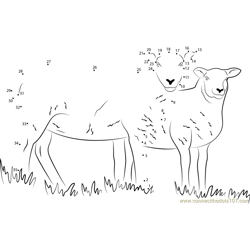 Sheep Cumbria Dot to Dot Worksheet