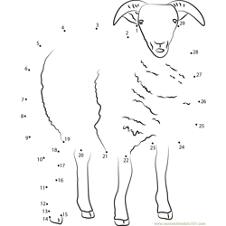 Sheep Dot to Dot Worksheet