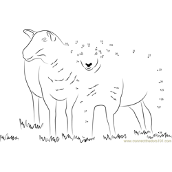 Two Sheeps Dot to Dot Worksheet