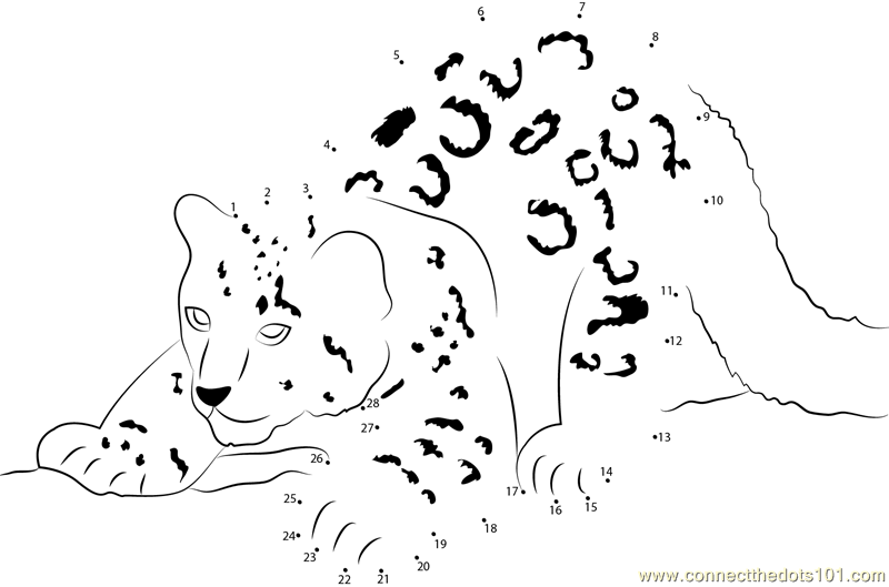 Snow leopard cub dot to dot printable worksheet connect the dots