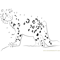Snow Leopard Looking His Food Dot to Dot Worksheet
