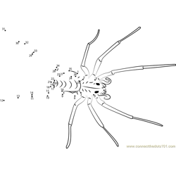 Giant House Spider Dot to Dot Worksheet