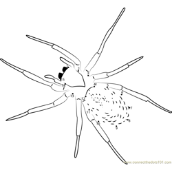 Lace Webbed Spider Dot to Dot Worksheet