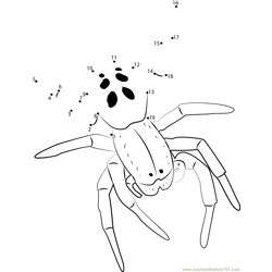Male Ladybird Spider Dot to Dot Worksheet