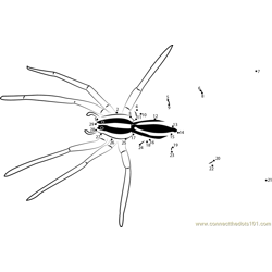 Wolf Spiders Dot to Dot Worksheet