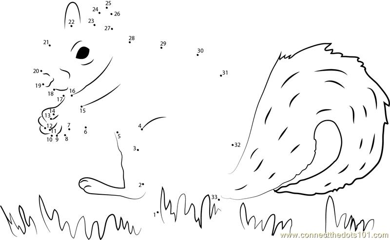 Squirrel Find His Food Dot To Dot Printable Worksheet