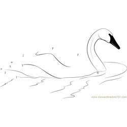 Swan Swim Dot to Dot Worksheet