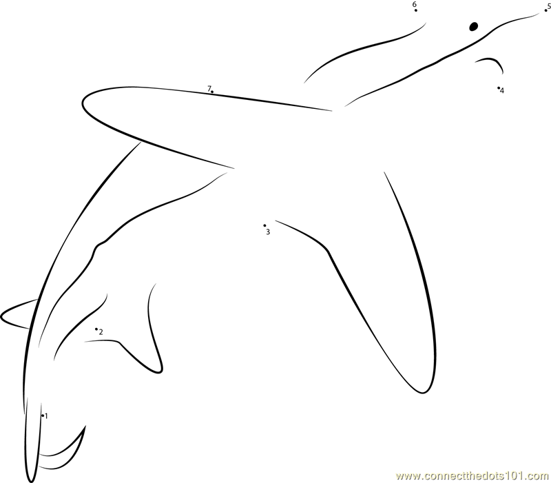thresher shark coloring page - pelagic thresher shark in pacific oceans dot to dot
