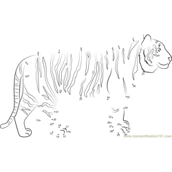 Tiger Up Look Dot to Dot Worksheet