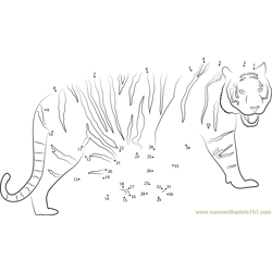 Walking Tiger Dot to Dot Worksheet