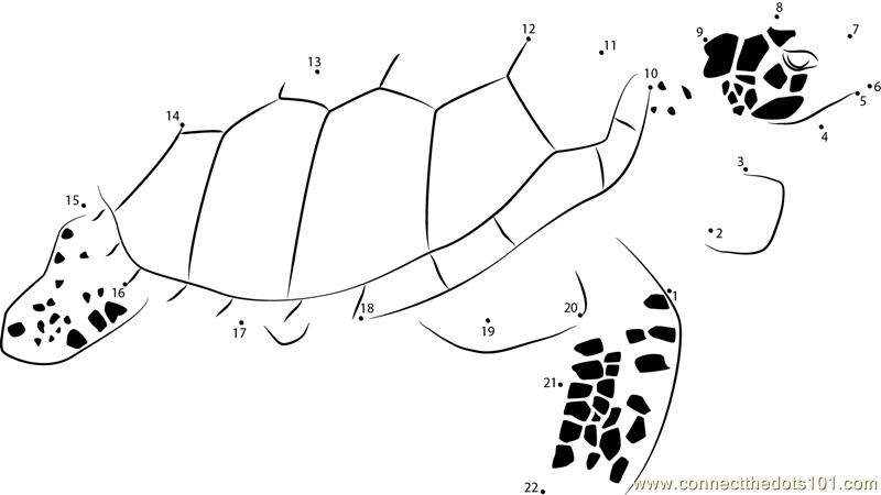 Excellent Sea Turtle Worksheets 92 Best Homeschool Turtles Images ...