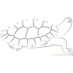 Turtle Look Dot to Dot Worksheet
