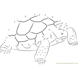 Turtle Standding on Rock Dot to Dot Worksheet