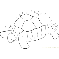 Turtle at Zoo Dot to Dot Worksheet