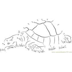 Turtle in Grass Dot to Dot Worksheet