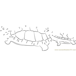 Turtles Going to Water Dot to Dot Worksheet