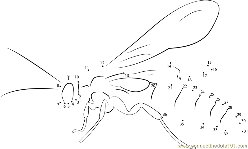 Black Flower Wasp Dot To Dot Printable Worksheet