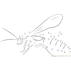 Black Flower Wasp