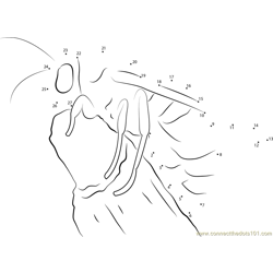 Umbrella Wasp