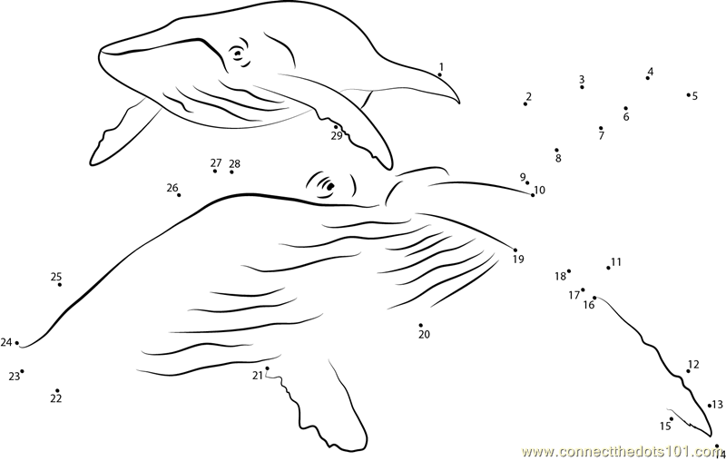 Humpback Whale dot to dot printable worksheet Connect