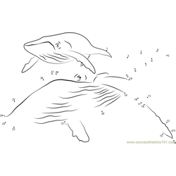 Humpback Whale Dot to Dot Worksheet