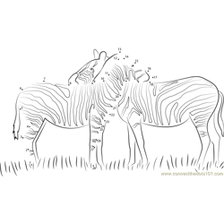 Two Zebras in Love